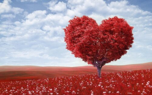heart shaped tree depicting a brand advocate due to your social media marketing presence